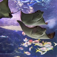 Ripley's Aquarium - North